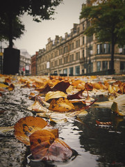 Autumn´s Essence (_Hadock_) Tags: green autumn autum manchester rain wet leaves hojas ojas mojado lluvia grey cold trio nikon aw120 creative commons fullhd fondo de pantalla screensaver desktop wallpaper walpaper uk united kingdom