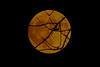 2017 11 3 Alta Valle Intelvi - Lanzo, Luna imprigionata fra i rami di un ciliegio ... (mario_ghezzi) Tags: lanzodintelvi lombardia italia intelvi valledintelvi nikon coolpix nikoncoolpix p7000 coolpixp7000 nikonp7000 nikoncoolpixp7000 marioghezzi noreflex altavalleintelvi 2017 luna