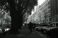 autumn light@Königsallee, Düsseldorf 5 (Amselchen) Tags: street light lightandshadow shadow bicycle mono monochrome blackandwhite fujifilm fujifilmxseries fujifilmxt2 xf35mmf14r fujinon season autumn