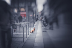 Waiting for its master (Dhina A) Tags: sony a7rii ilce7rm2 a7r2 diy tilt shift lens bokeh dog waiting master owner shop