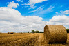 Bales, again! (bharathputtur122) Tags: hay bales sunny clouds bright blue yellow scenery uk buckinghamshire dinton nikon d750 2470 nikkor circles crops