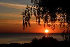 Alba sull'Adriatico (luporosso) Tags: natura nature naturaleza naturalmente nikon nikond500 nikonitalia imdifferent alba albero mare sole sunrise trees sea sun sunray silhouette siluetas controluce contraluz backlight backlit