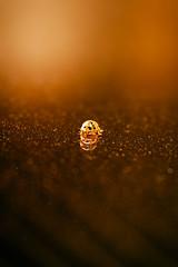 Past, present and future (Ans van de Sluis) Tags: ladybug macro ansvandesluis bokeh past present future pastpresentfuture