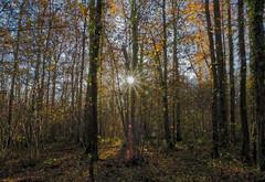 L'étoile des bois (Rangi 52) Tags: