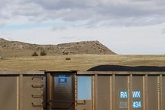 Cattle lounge above the coal (kschmidt626) Tags: powder river wyoming union pacific bnsf burlington coal train c