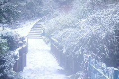 Steps in the Snow (Dave Roberts3) Tags: wales gwent newport park bellevue wintry trees path steps footprints bridge fence landscape green branches winter