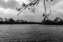 Lake (Filippo M. Conte) Tags: copenaghen denmark holiday winter christmas travel journey europe black white bw blackandwhite christiania lake river woods