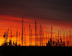 Another Friday row.... another amazing sunset across Chesil Beach... (Sue - busy for a few days.... still happy sparrow.) Tags: chesilbeach chesil beach boatyard yachts sailingacademy portland dorset wpsa pampasgrass red orange