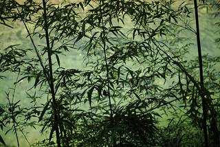 静かに佇む緑の竹林