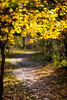 Jack Pine Trail (PhotoBal) Tags: 135mmf2 autumn df fall nikon ottawa rokinon leaves ontario canada ca