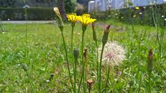 green (medeirosisabel16) Tags: flower grass garden campos do jordão cell phone celular nature natureza green verde spring primavera