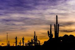 Sonoran Sunset (Mac H (media601)) Tags: desertbotanicalgarden phoenix az arizona cactus sunset saguaro silhouette sky clouds