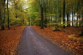 A Roadtrip in Skåne