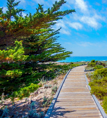 Beach Boardwalk Digital Art (randyherring) Tags: asilomarconferencegrounds ca california pacificgrove pacificocean beach boardwalk historic nature outdoor park recreational