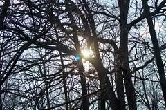 DSC00459 (baylersmith) Tags: minnesota state park nature statepark hunting dog fall