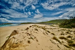 Dunes (jack eastlake) Tags: bournda national park endangered species birds nesting dunes tathra tura beach wild beaches lagoon