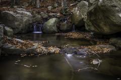 Otra de la riera (candi...) Tags: riera montseny naturaleza nature corriente agua saltodeagua rocas piedras hojas arboles sonya77 airelibre