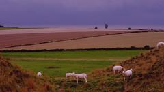 362-14L1 (Lozarithm) Tags: silburyhill sheep landscape justpentax kx pentax zoom 50200 smcpda50200mmf456ed abstractsexperiments
