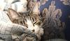Sleeping Cat (NathanJNixon) Tags: chair highlight comfort cute highlgiht sleeping day bella blanket animal nap restful pet quiet bright calm sleepingcat rest adorable snug cat sunny happy light lexington kentucky unitedstates us