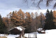 Plan Bocon (bulbocode909) Tags: valais suisse ravoire montagnes nature alpages automne forêts arbres mélèzes neige chalets orange branches sapins vert planboccan
