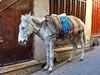 Fez, Morocco - Nov 2017 (Keith.William.Rapley) Tags: fez fes morocco rapley keithwilliamrapley 2017 nov november africa fezmedina oldtown donkey alley alleyway medina feselbali