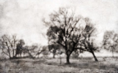 a place in time . . . (YvonneRaulston) Tags: australia vic corryong trees tree texture country monochrome blackandwhite bw old sony atmospheric art abstract creativeartphotography calm cold dream emotive peaceful fineartgrunge soft moody moments morning netartii photoshopartistry surreal