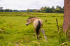 A horse in Bonheiden, Belgium. (ost_jean) Tags: ostjean horse paard cheval