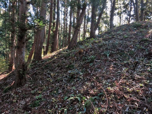 Mt. Atago November 3, morning light on Kofun tomb
