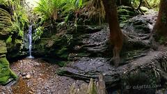 Worst kept Secret Falls Hobart (edgetas.com - tasview.com) Tags: secretfalls hiddenfalls hobartmtwellingtontasmaniaaustralia waterfall stream ferns gem creek bed