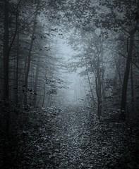 Through / à travers (cébé céline) Tags: paysage forêt automne sentier brume branches arbres montréal matin bois stratus mountain morning path forest wood trees foggy nb bw nikond7200 montroyal