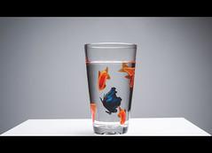 (Photo-LB) Tags: poisson fish nikon d800 nikon55ais godox godoxad360ii