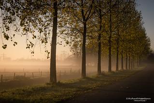 2017-11 Opkomst zon bij nevel en vrieskou - Zwartewaal/NL