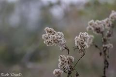 In autunno.. (paolotrapella) Tags: autunno verde natura bokeh tamron70300vc canoneos600d paolotrapella