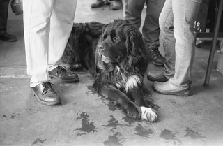 A furry companion visits the 223 Restoration Shop at the Union Station in Ogden, Utah. Camera: Minolta Hi-Matic 7S (1966). Film: Ilford HP5 Plus 400.