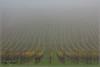 Der Herbst bringt den Nebel (_Asphaltmann_) Tags: pentax pentaxlife pentaxians photosunlimted pentaxart photos pentaxk3 pentaxda k3 18135mm smcpda18135mmf3556edalifdcwr nebel fog natur nature