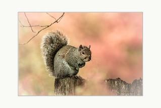 Any nuts around here