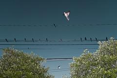 les-oiseaux-3 by francois ollivier -