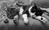 Our Sleepy Ladies (AnyMotion) Tags: nelli mira sisters schwestern sleepingonthecouch pet cat cats katze katzen animals tiere bokeh 2017 anymotion blackandwhite schwarzweis blancoynegro félin chat gata 6d canoneos6d bw blackandwhire sw