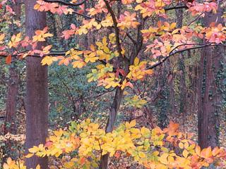 Herbst im Schlosspark Karlsruhe
