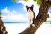 thrivers on islands #112 (Taketomi Island, Okinawa) (Marser) Tags: xt10 fuji raw lightroom japan okinawa taketomi island sea seashore fineweather cat tree 沖縄 竹富島 海 猫 貓