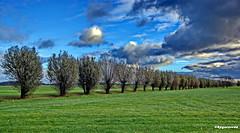 Baumreihe (garzer06) Tags: wolken grün deutschland landschaftsbild ramitz mecklenburgvorpommern landschaftsfoto baumreihe vorpommernrügen landscapephoto vorpommern inselrügen wolkenhimmel insel landscapephotography rügen blau landschaftsfotografie