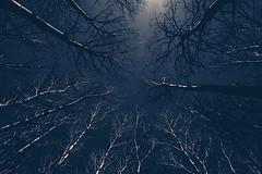 Hecla, MB (joshuadavidreid) Tags: hecla manitoba canada trees sky moody