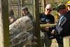 IMG_1262 (goaniwhere) Tags: wolf animal wolves wildanimal sanctuary