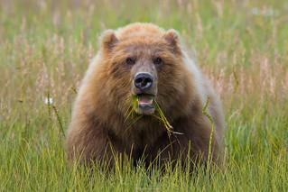 Momma Bear Says  3I9354