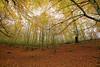 Serie Otoño (pascual 53) Tags: hayedo canon 5ds 1635mm hojas otoño sincielo colores ramas parque paisaje naturaleza