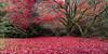 Fallen (seankerrphotography) Tags: autumn scotland tree bush secretgarden dunblane leaves landscape red