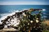 Cinque Terre (m.a.r.c.i) Tags: fujifilm xe1 fujinon xf1855mm landschaft landscape italien italy italia ligurien ligure cinqueterre meer ozean m riomaggiore