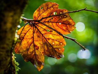 Herbsttag (Autumn Day)