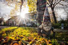 Dwarf in Mijdrecht (PaulHoo) Tags: dwarf fall autumn fujifilm x70 humor light ray sun 2017 tree leaf
