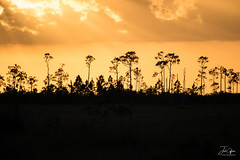 Sky on Fire (J.Coffman Photography) Tags: everglades pine trees silhouette season preserve state fl sunshine wilderness hiking hike d810 nikon clouds marsh forest states united florida big cypress national park landscape swamp dry sun light lighting
